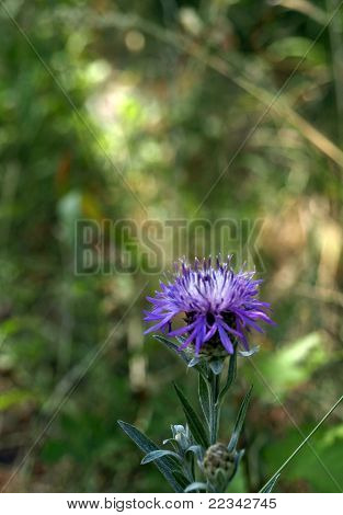 Lovely dark blue flower