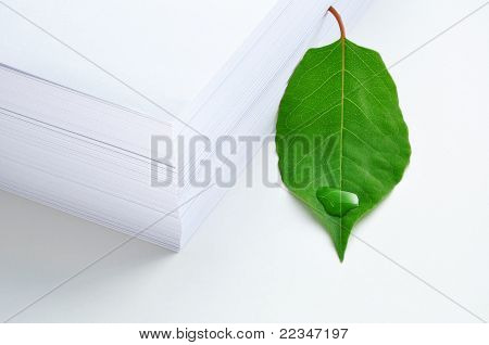 Green Leaf And Paper