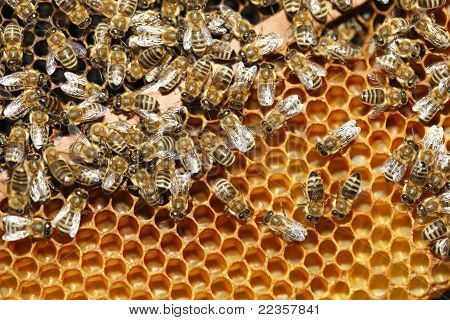 working bees