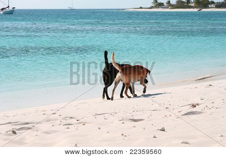 Two dogs at the beach