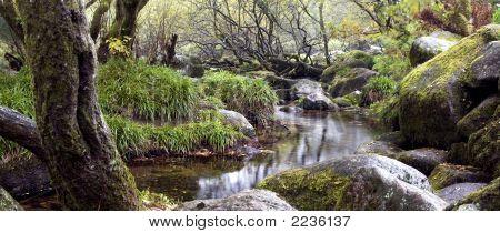 Dartmoor Tranquility
