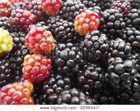 Blackberry background