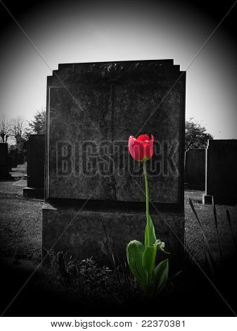 Rose On My Grave