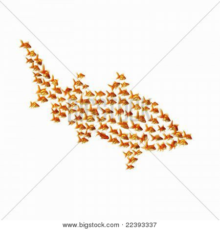 gold fish together