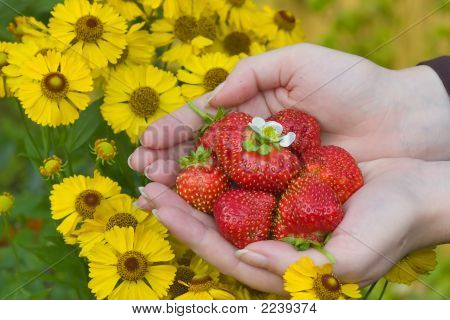 Strawberries And Yellow Flowers