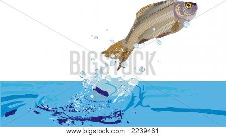 Illustration With Fish