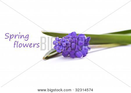 First Blue Springs Flowers