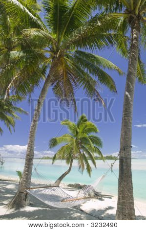 Tropical Dream Beach Paradise Hammock Under Palm Trees