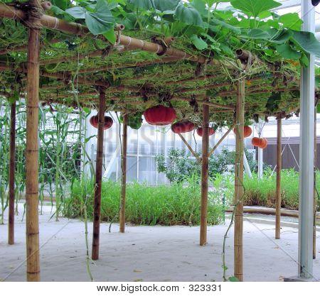 Hydroponics Greenhouse