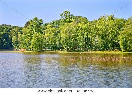Lake & Egret