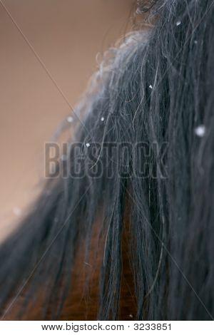 Horse Mane In Snow