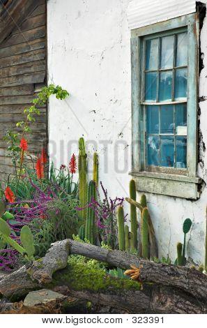 Cactus Garden Window