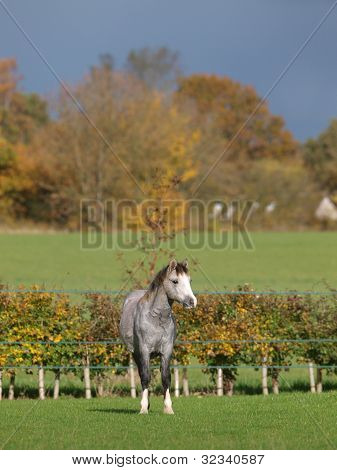 Welsh Pony In Beautiful Light