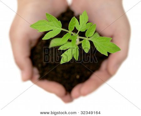 A Small Plant In The Caring Hands