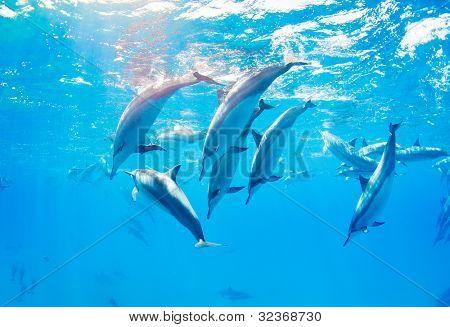 Delphine schwimmen unter Wasser, tropischen Ozean
