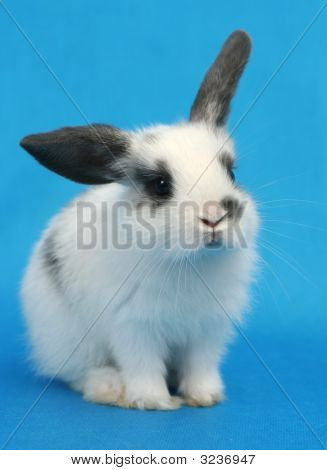 The Lovely Rabbit On A Blue Background