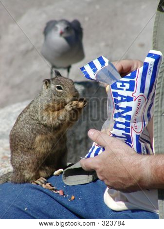 Snacking On Peanuts