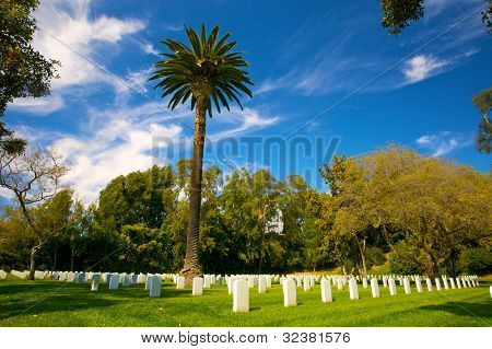 Palm Tree In Cemetery
