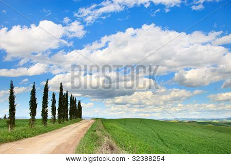 Tuscany, Cypress Trees, White Road, Green Field, Siena, Italy.