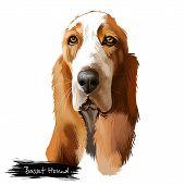 Basset Hound Or Hush Puppy Short-legged Breed Scent Hound Family Dog Digital Art Illustration Isolat poster