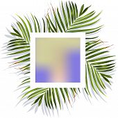 Tropical Leaves. Jungle Background Flower And Palm. Vector Jungle Illustration. Green Tropical Leave poster
