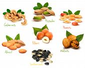 stock photo of pine nut  - Big collection of ripe nuts - JPG