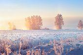 Sunny Winter Morning. Beautiful Winter Scene In Frosty Morning. Winter Morning Sunrise poster