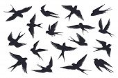 Flying Birds Silhouette. Flock Of Swallows, Sea Gull Or Marine Birds Isolated On White Background. V poster
