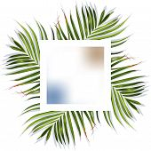 Green Tropical Leaves Banner. Tropical Leaves. Jungle Background Flower And Palm. Vector Jungle Illu poster