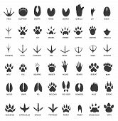 Animals Footprints. Animal Paws Prints. Elephant And Gorilla, Bison And Wolf. Cat, Dog And Deer, Bea poster