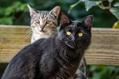 Two young cats outdoor in the garden - black cat and short hair common house cat portrait. poster