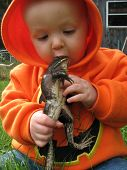 stock photo of orange frog  - Optical Illusion of Child Eating Frog in Summer