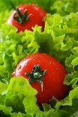Tomatoes On Lettuce