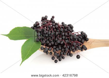 Elderberry fruit in an olive wood spoon with leaf sprigs over white background.