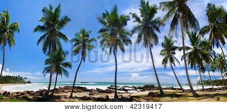 Beautiful palm groove and turquoise tropical sea. Panoramic photo