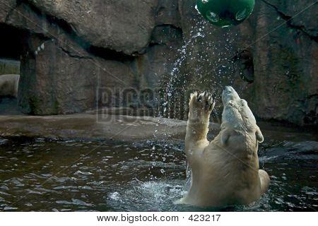 Playing Polarbear