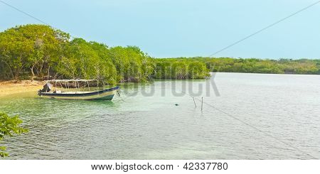 Boat In A Mangrove Forest.