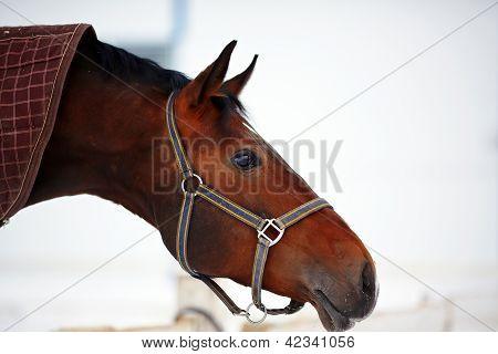 Portrait Of A Horse.