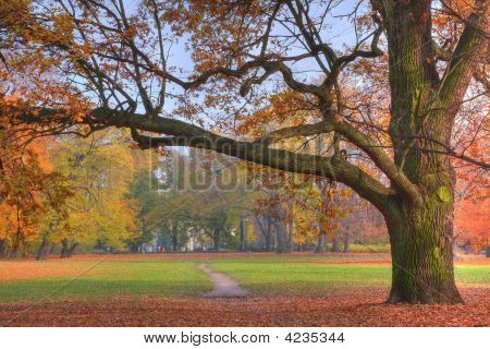 Colores de otoño en el Parque