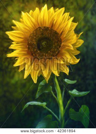 Garden Sunflower - Digital Painting