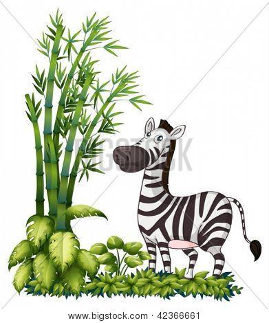 Abbildung eines Zebras in der Nähe von Bambusgras auf weißem Hintergrund