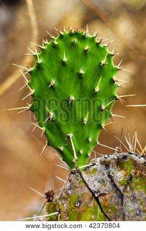 Green Cactus Leaf