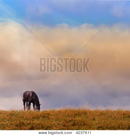 Lonely Horse On A Log