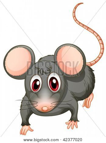 Illustration of a young mouse on a white background