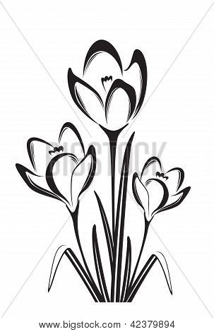 Black And White Drawing Of Crocus