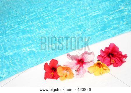 Hibicus Flowers By Pool