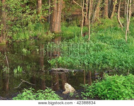 Bog At Spring Time