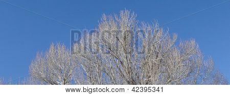 Árvore no inverno com ramos nuas ao longo do rio Yampa em Steamboat Springs, Colorado