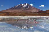 stock photo of eduardo avaroa  - Bolivia  - JPG