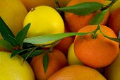 Citric close up poster